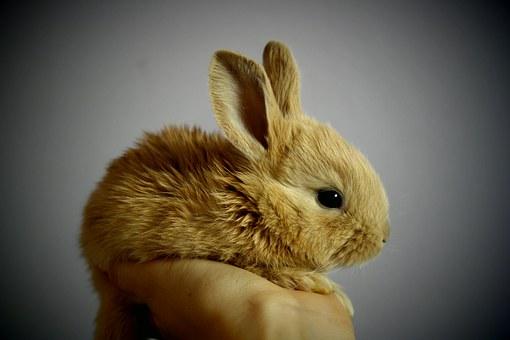 Ile powinien jeść królik?